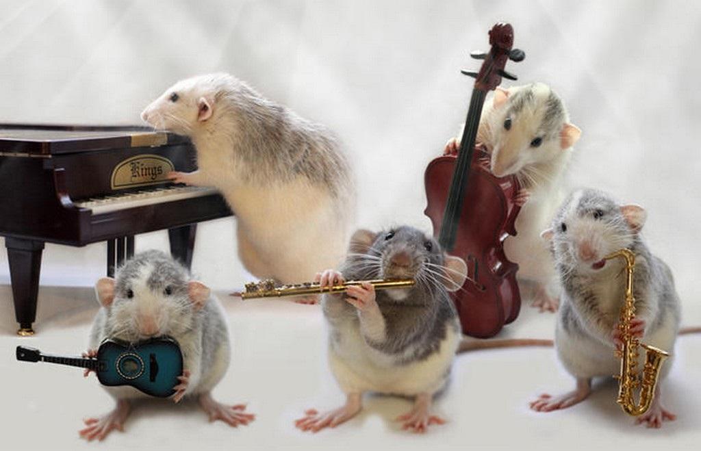 шуточное поздравление оркестр с днем рождения холмистый рельеф, дивный